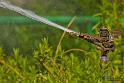 Water sprinkler. Garden irrigation system watering plants.