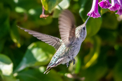 Birds and Flowers-7387