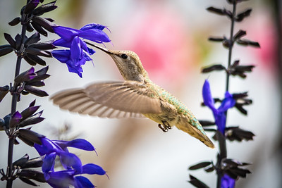 Birds and Flowers-7258