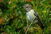 Hummmingbird9290
