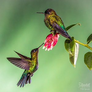 Still life with hummingbird.....