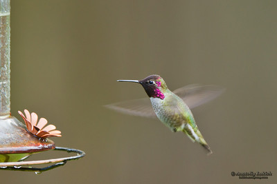 Hummingbird and feeder.