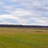 Sandhill Crane resting area at Jasper-Pulaski FWA