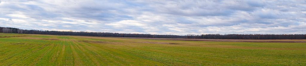 Sandhill Crane resting area at Jasper-Pulaski FWA, Medaryville, IN