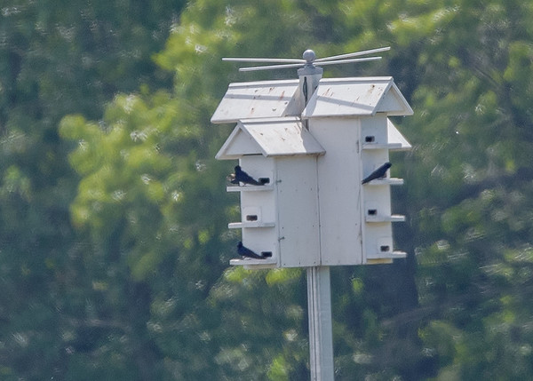 Purple Martin house at Willow Slough FWA, Morocco, IN