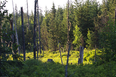 RUBL-Habitat-Kispiox-BC-Canada-552