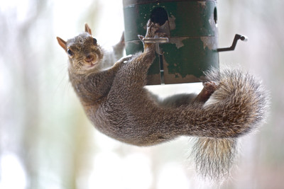 """Squirrel proof"" feeder? Where there is a will, there is a way!"