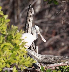 December 2009, Long Key State Park, Florida, USA