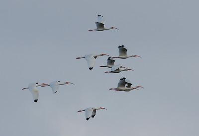 December 2009, Everglades National Park (Flamingo), USA