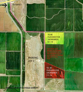 Yolo Bypass Wildlife Area fields scheduled to be flooded to attract shorebirds in 2014.