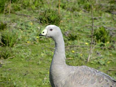 Birds of Austrailia and New Zealand