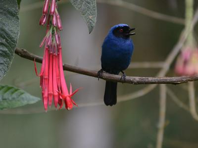 Birds of Columbia