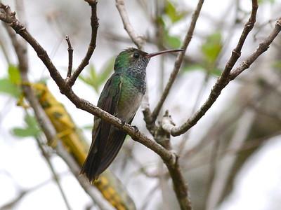 Birds of Honduras