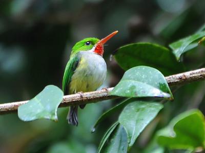 Birds of Puerto Rico