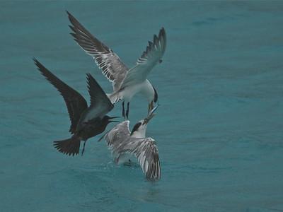 Birds of Tahiti