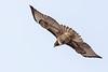 Hawk8814(8x12)