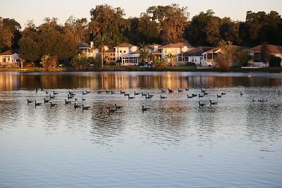 Jacksonville Birding 2015