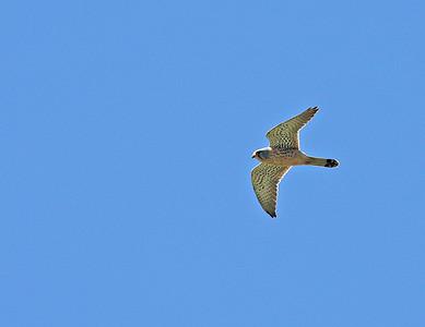 31.3.2018 Punta Carnero, Spain