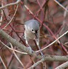Tufted Titmouse at end of Bike Path.