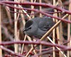 Catbird at end of Bike Path.