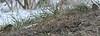 Field Sparrows at Long Road