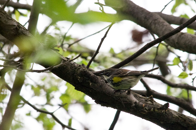 April 21, 2012<br /> <br /> Bird walk at Ford house...
