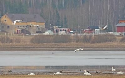 30.3.2016 Nurmijärvi, Finland