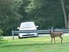 July 26 - Long Road - Deer