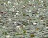 July 23 Tinkham Pond