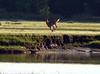deer at Edgewater