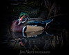 Male Wood Duck-Franklin Canyon Park near Beverly Hills, CA
