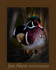 """""""Sunrise Treasure"""" recently received an 82 in local competition.  This wood duck was nestled in the reeds just watching the day start. It was early morning.  The only distractors were morning walkers with their dogs.  Otherwise it was a pleasant outing. Quack Quack!"""
