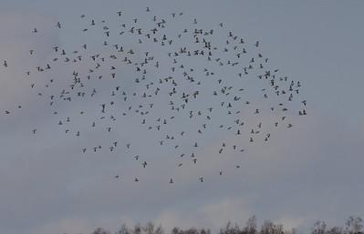 1.4.2012 Vantaa, Finland
