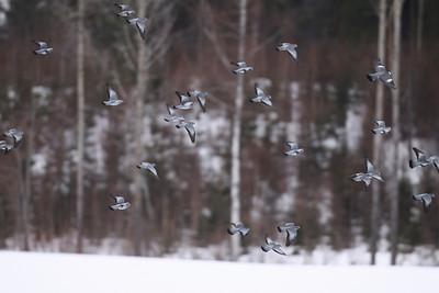 23.3.2010 Espoo, Finland