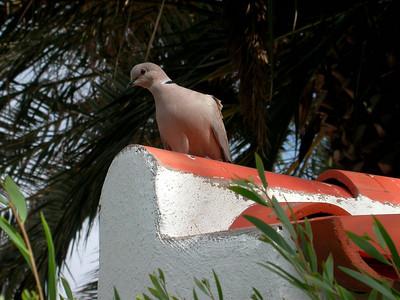February 2006, Canary Islands, Spain