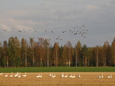 22.9.2012 Joutsa, Finland