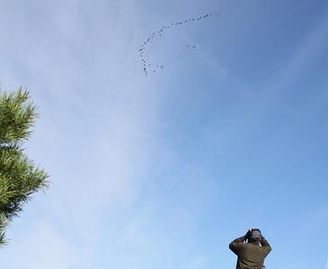 9.9.2012 Helsinki, Finland  Finnish birdwatcher counts migrating cranes
