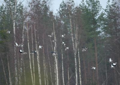 12.11.2010 Joutsa, Finland