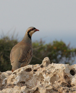 25.10.2011 Cyprus