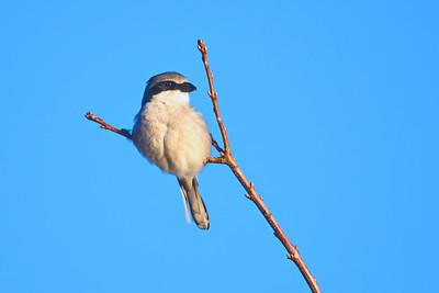 Katy Prairie Birds