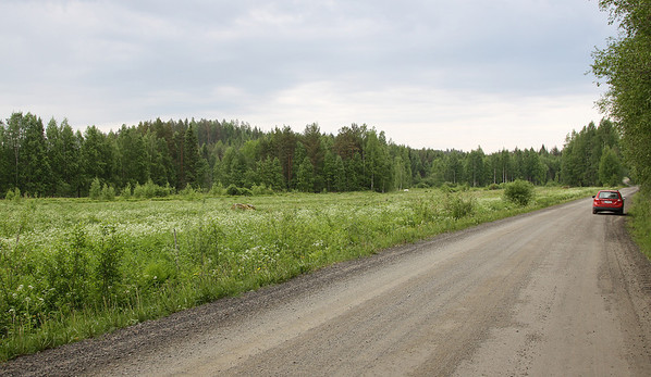 Joutsa, Finland  Pieni villiintynyt pelto keskellä metsäistä aluetta, jossa  vuosittain viitasirkkalintuja, pensassirkkalintuja, viitakertusia, ruisrääkkiä, helmipöllö ja 2014 myös idänuunilintu.   Excellent warbler field in the middle of forest. Yearly River and Grasshopper Warblers ,  Blyth's Reed Warblers, Corncrakes, Tengelmalm's Owl and once also Greenish Warbler, most of them singing simultaneously