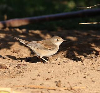 26.11.2010 Ofira Park Eilat, Israel