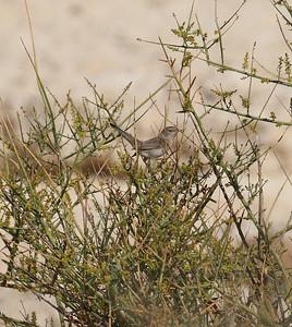 28.11.2010 Eilat, Israel