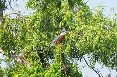 Sabal Palm Grove, Brownsville, TX 04/20/2009