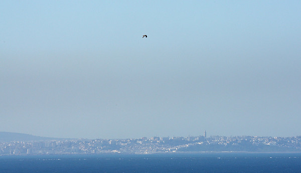 26.3.2018 Tarifa, Spain  Booted eagle crossing the Strait of Gibraltar, Morocco in the background