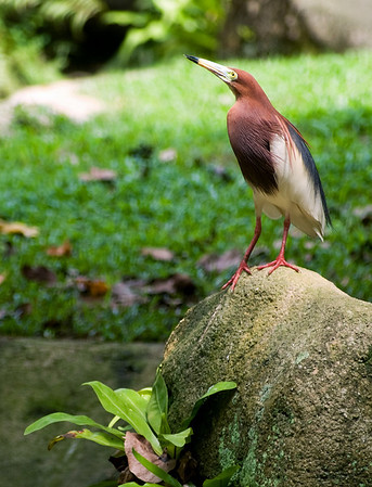 KL - Bird Park - 12_res