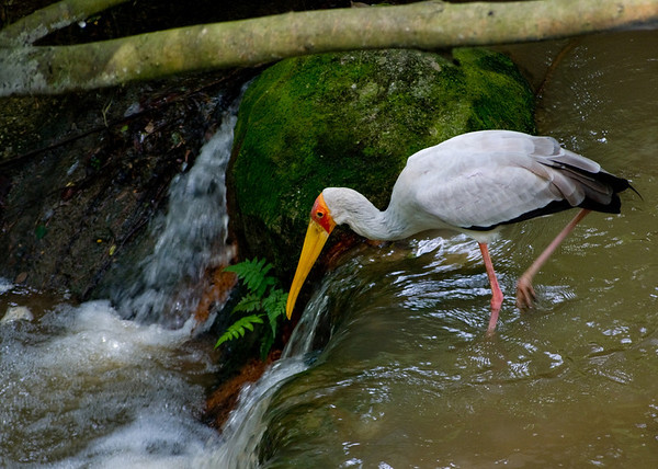 KL - Bird Park - 14_res