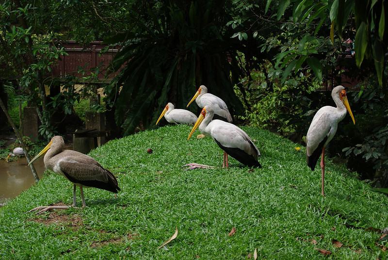 KL - Bird Park - 15_res