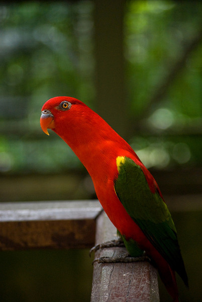 KL - Bird Park - 01_res