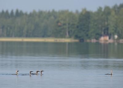 4.8.2013 Joutsa, Finland